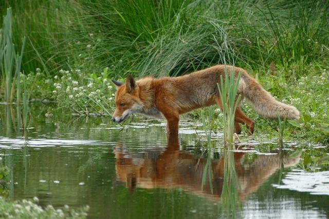 kids nature wildlife charities