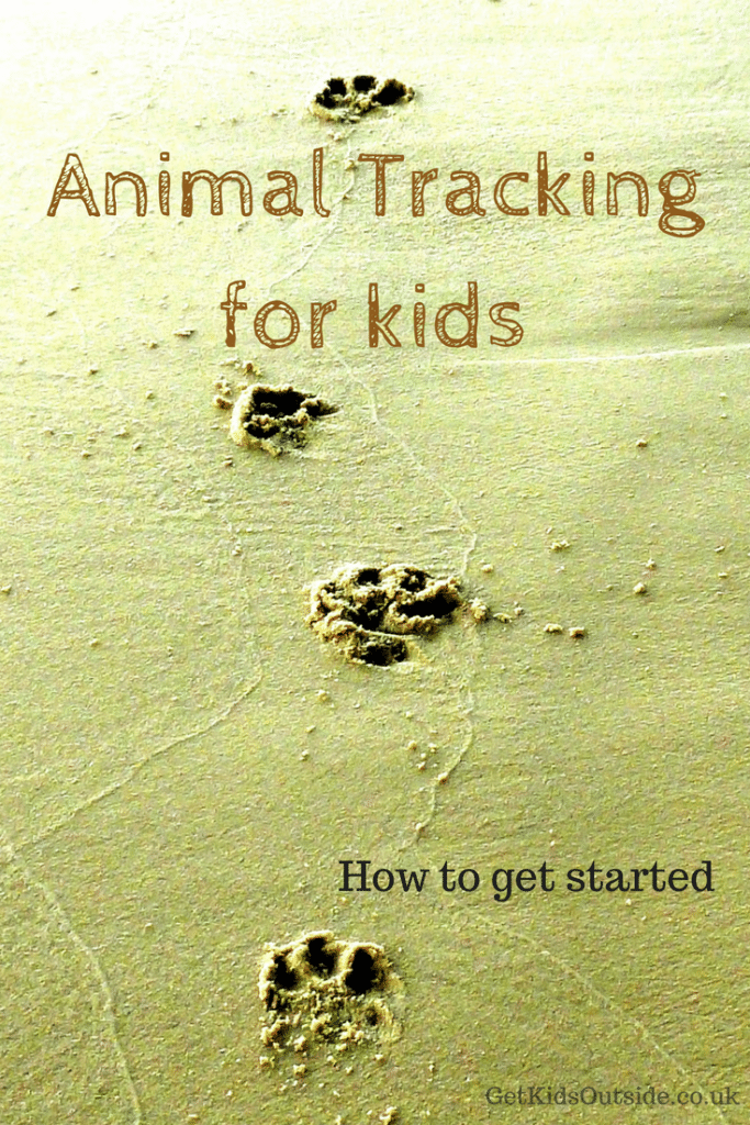 Animal Tracking for kids