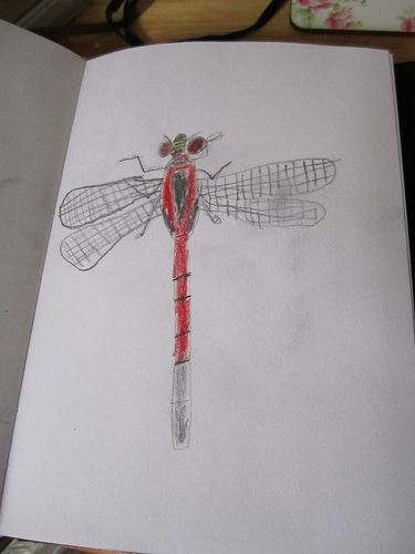 Dragonfly kids drawing in nature journal