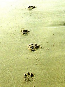 animal tracks for kids