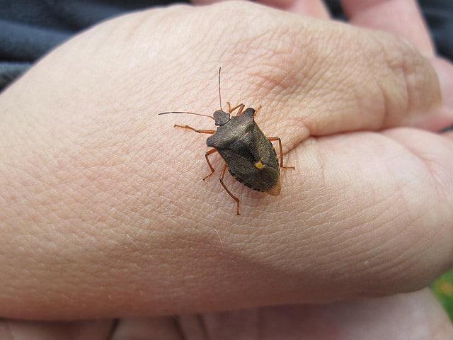 bug hunting kits for kids