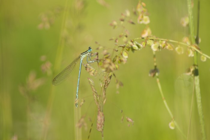 damselfly near a pond