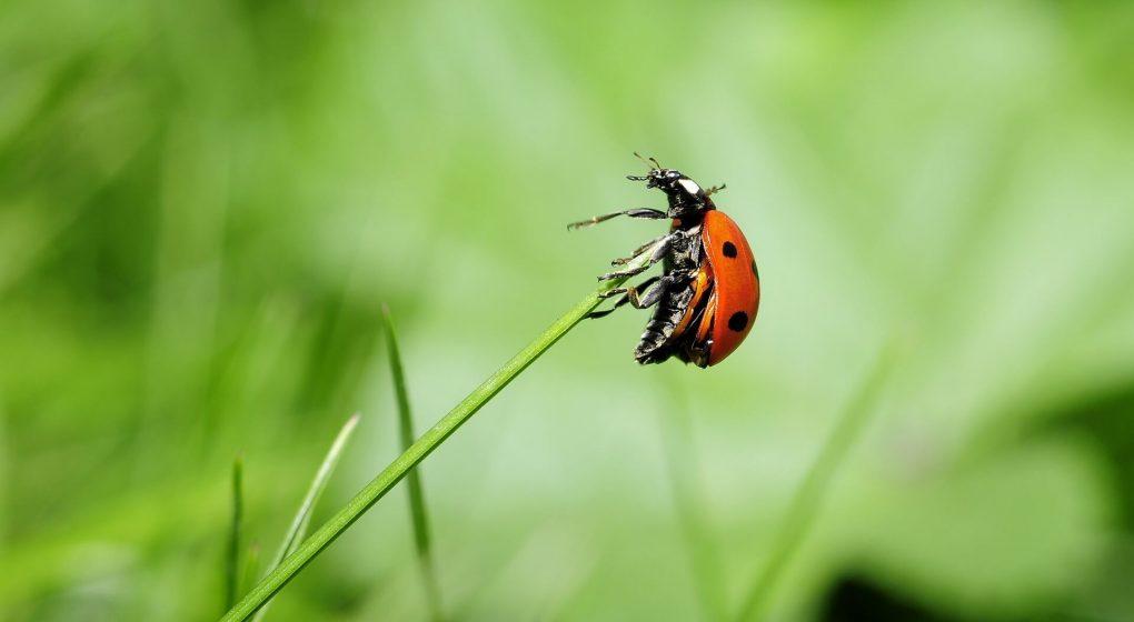 ladybird minibeast activities